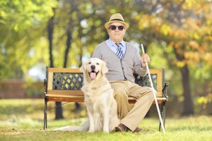 Взимаются ли алименты с пенсии — что говорит об этом закон